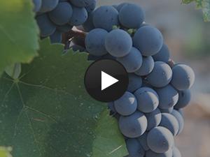 les-vins-languedoc-roussillon